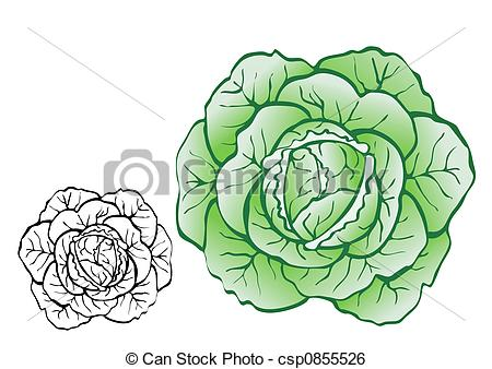 Cabbage clipart repolyo Food pictures 88 Cabbage Stock