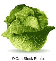 Cabbage clipart repolyo Cabbage 009 vector Stock Clipart