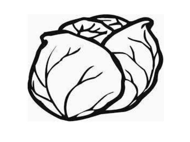 Cabbage clipart sayur  sayur 11 Buah dan