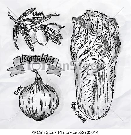 Cabbage clipart sketch  onion of Vegetables napa