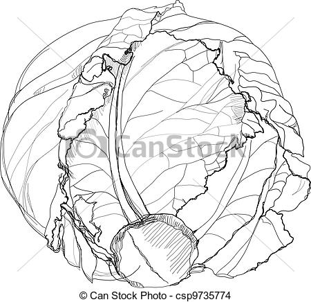 Cabbage clipart sketch Background  Vector on cabbage