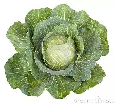 Cabbage clipart vege Pinterest Vegetable card? and best