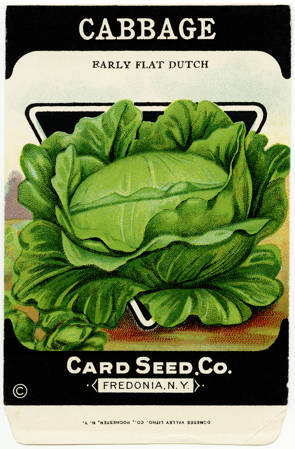 Cabbage clipart vege Seed  packet seed seed