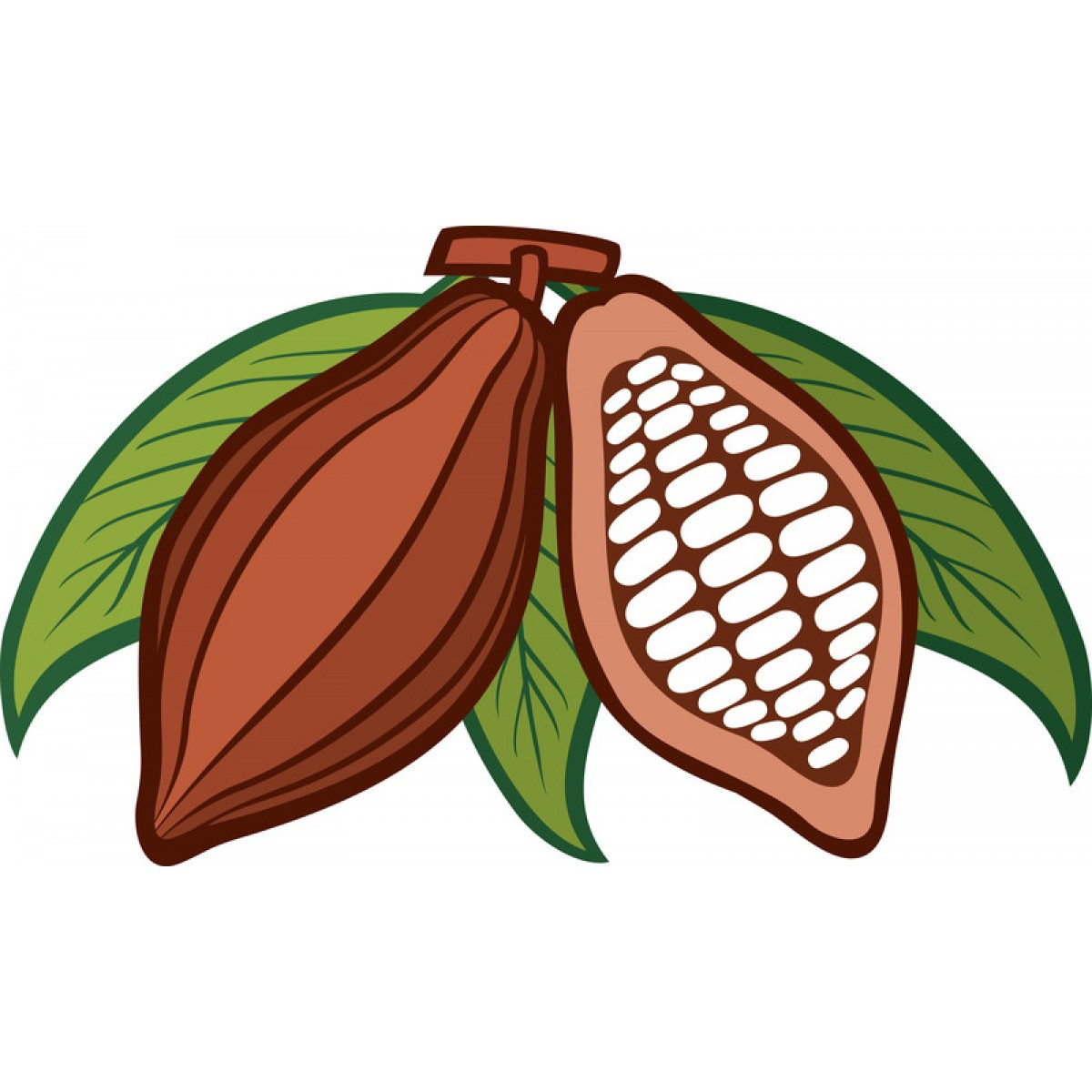 Cacao clipart Organic Beans More Cacao Views