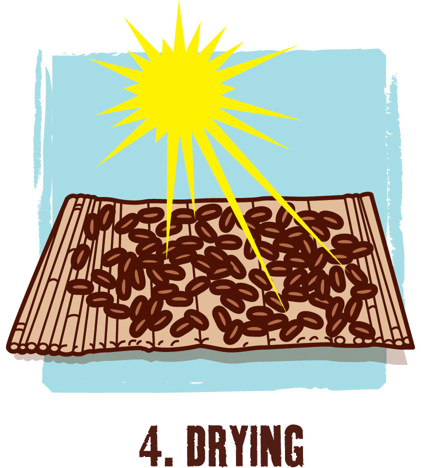 Cacao clipart dry bean From tables the Ghana for