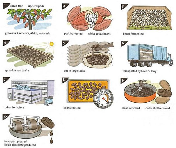 Cacao clipart dry bean On images  best Processes