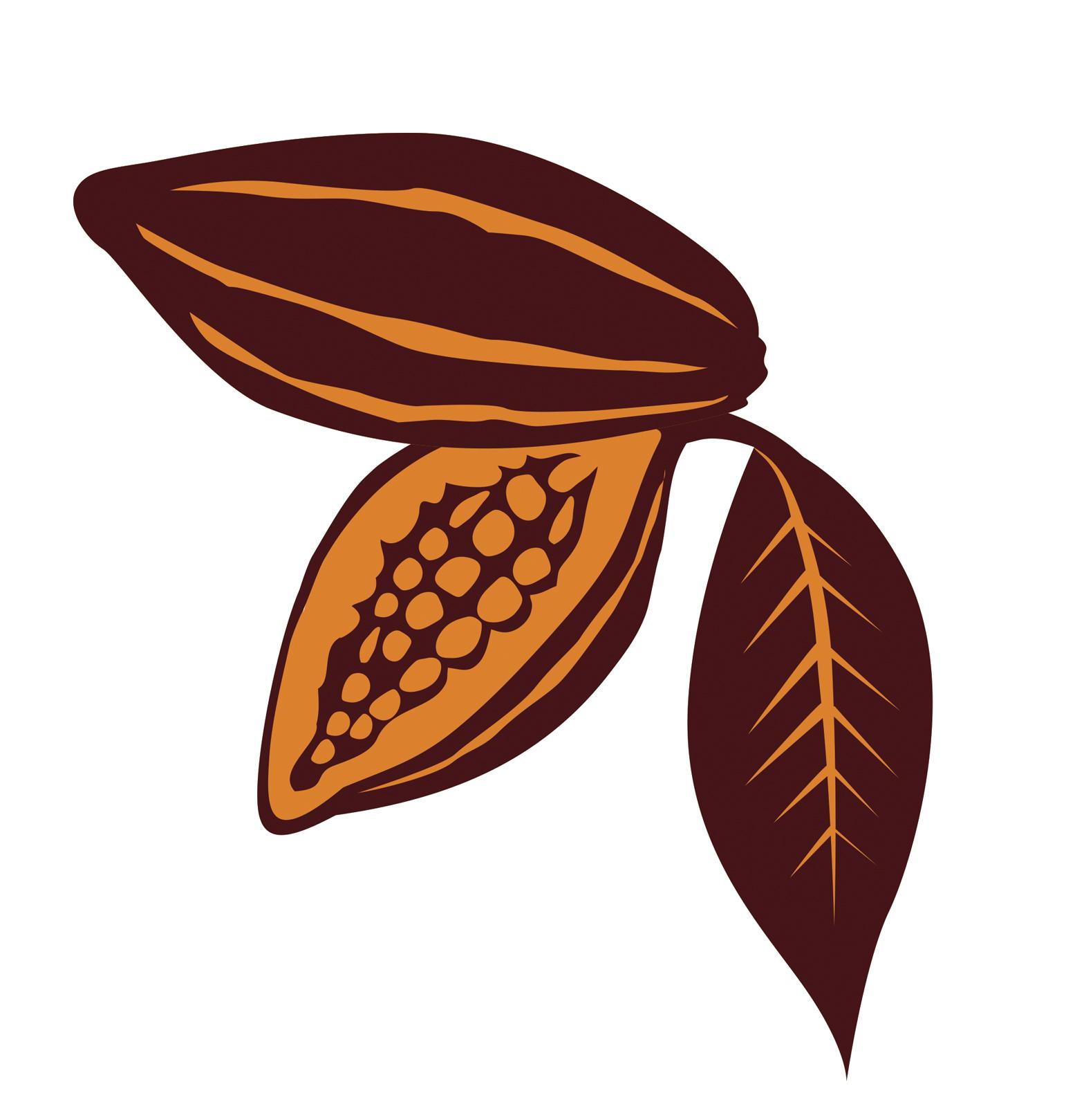 Cacao clipart dry bean LOGO Explore CON (grano IDENTIFICARA
