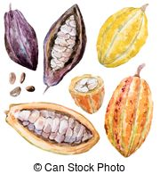 Cacao clipart dry bean Hand 996 EPS Illustrations