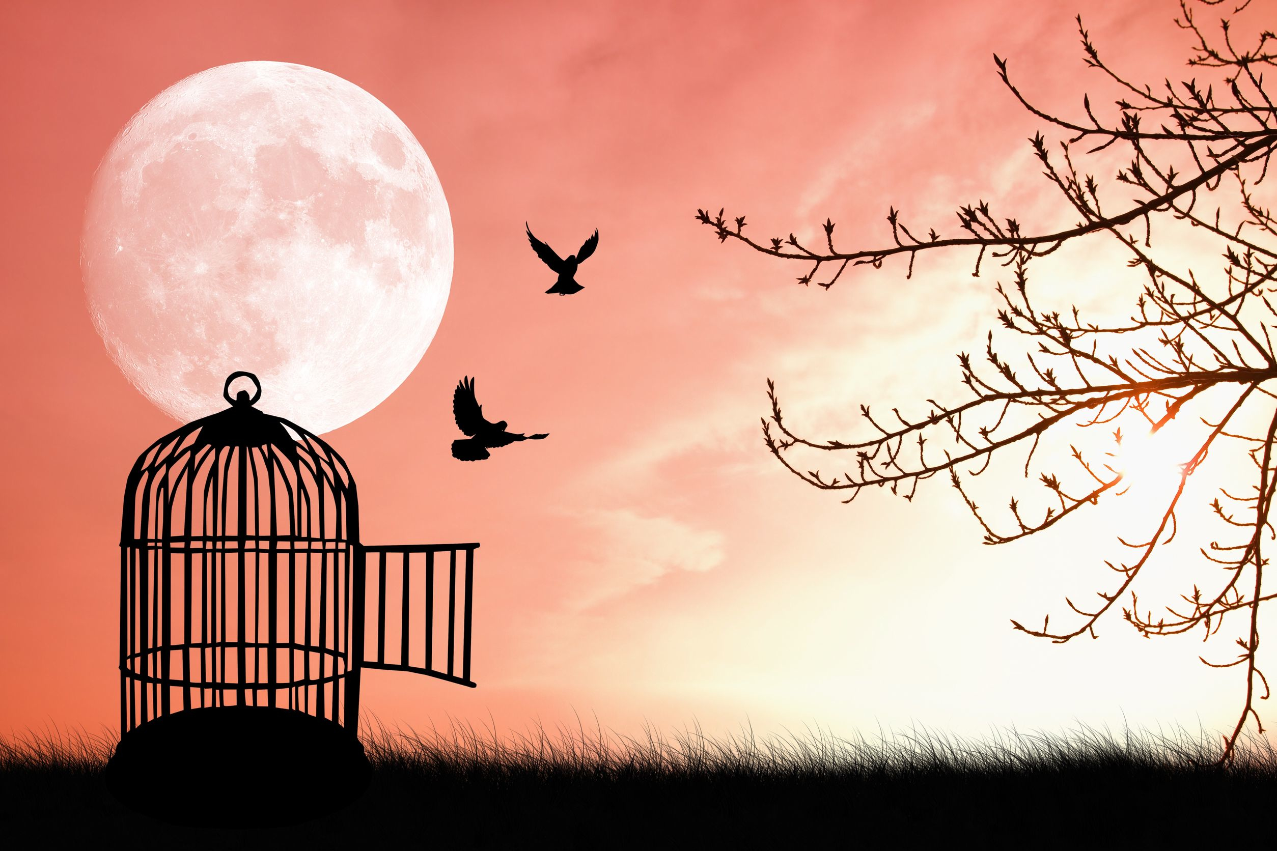 Cage clipart freedom bird #images Bird From Freedom Bird