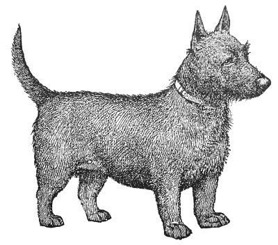 Cairn Terrier clipart Terrier (scottish) Download Clip Terrier