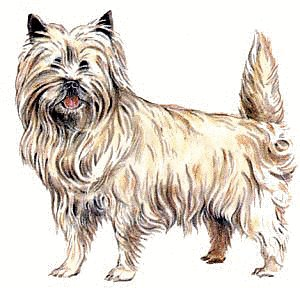 Cairn Terrier clipart Cairn and Terrier Graphics Clipart