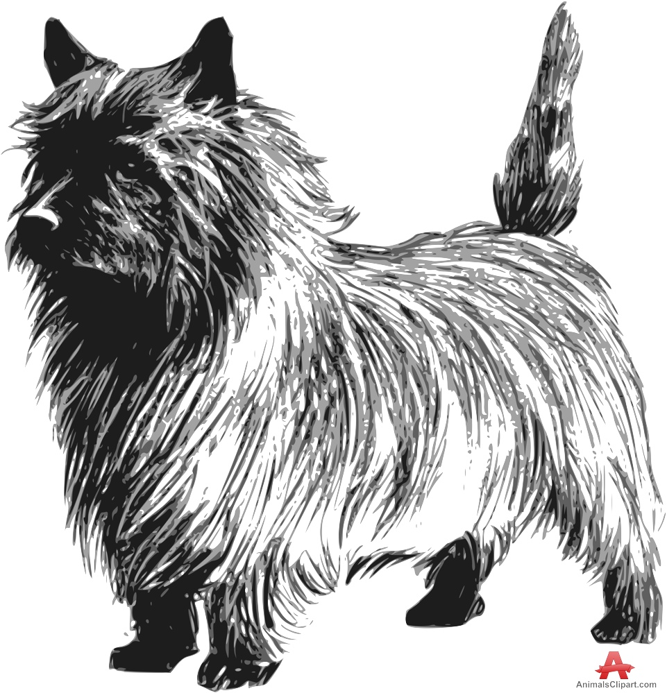 Cairn Terrier clipart Cairn Free Design Terrier Drawing