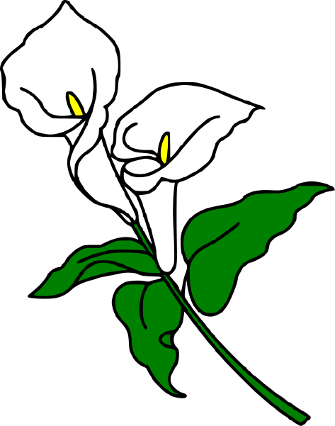 Lily clipart Clipart Calla clipart Download Lily
