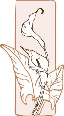 Calla Lily clipart art deco Search on images Calla best