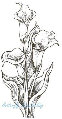 Calla Lily clipart easy Con vgosn_vintage_ornate_frame_border_clip_art_image calla Google Graphics