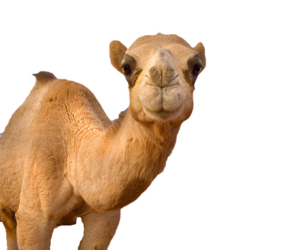 Camel clipart camel head Logo Projects Logo Camel Skillshare