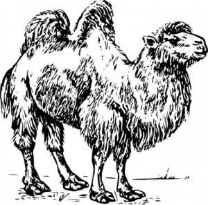 Camel clipart camel head Art Camel Camel Download Clip