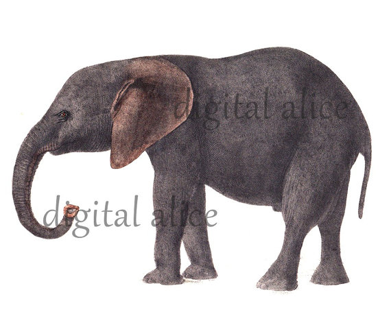 Camel clipart circus elephant Animals and 17 animals Antiques