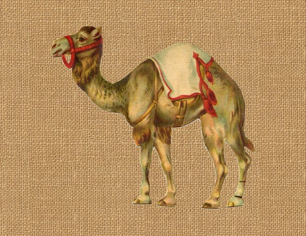 Camel clipart circus elephant Full Printable Camel Image