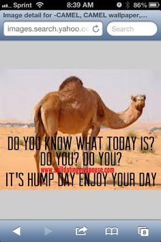 Camel clipart geico Day know #funny  you?