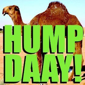 Camel clipart geico The Camel on Alert Hump