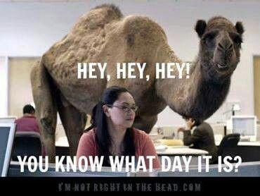 Camel clipart geico Pinterest Pin best day more