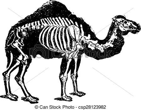 Camel clipart body Camel the Vector Dromedary of