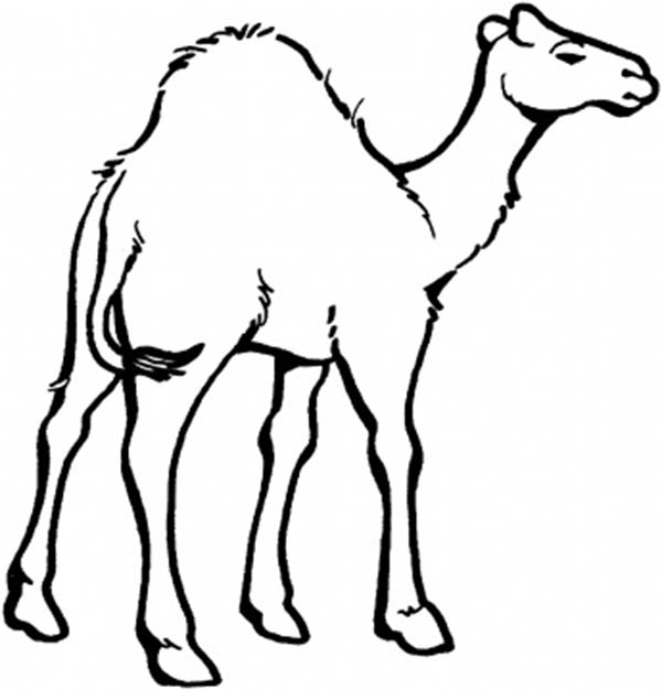 Camel clipart coloring Print Coloring for Download Download