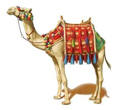 Camels clipart egyptian Camels Mormon this camel Paint