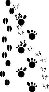Footprint clipart camel & #4544 Footprints art Clipart