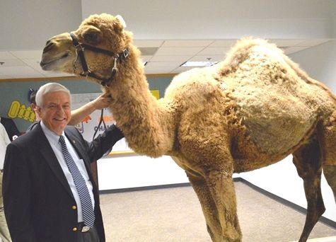 Camel clipart geico On Camel Caleb 75 Only