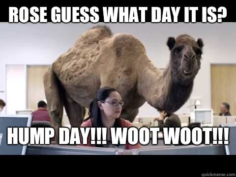 Drawn camel hump day camel On DAY what WOOT camel