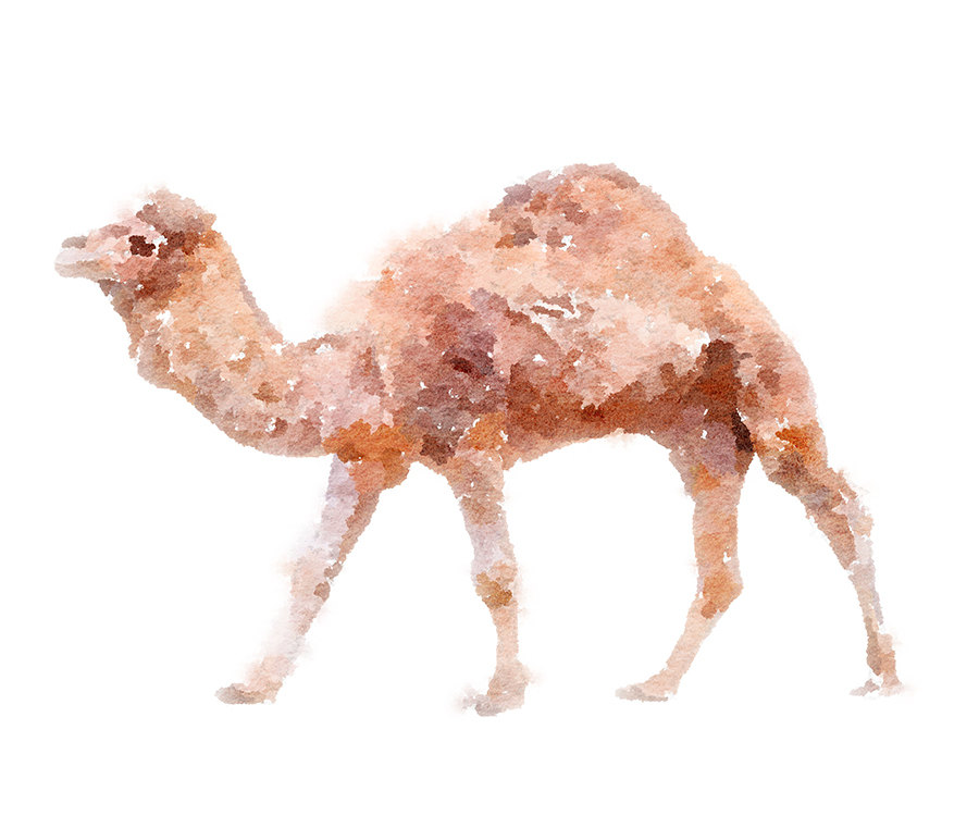Camel clipart manger Camel Animal watercolor & Clipart