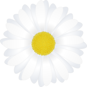 Chamomile clipart flower bunch Cliparts Download on Free flower
