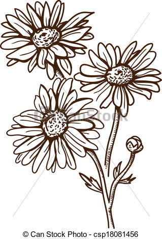 Camomile clipart Flower of isolated Clipart white