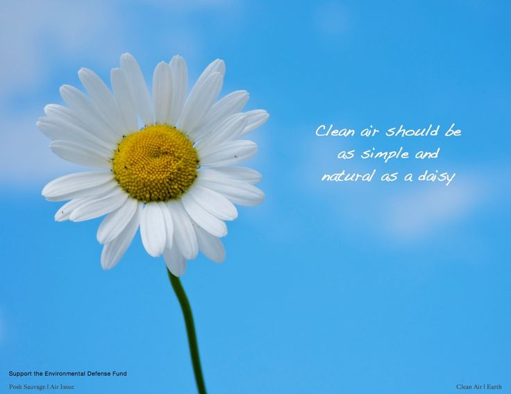 Camomile clipart clean air Images Support Air Fund 39
