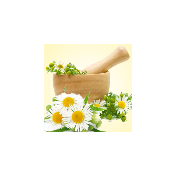 Camomile clipart clean air Oil Chamomile  Scents Fragrance