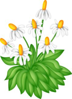 Camomile clipart potted plant ° flores hanging flowers my