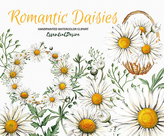 Camomile clipart real Wedding Art White Hand Romantic