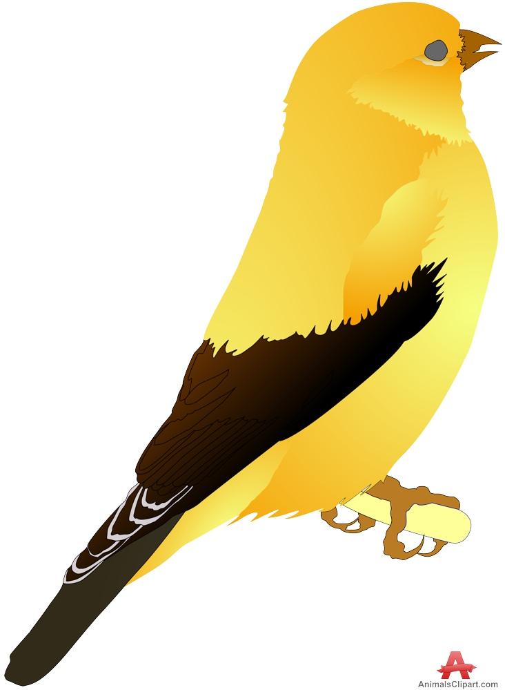 Canary clipart Download Clipart Design Clipart Bird