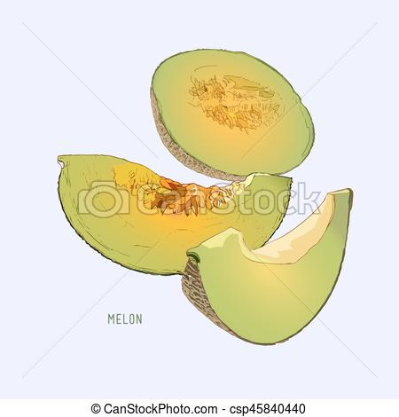 Honeydew clipart slice Fruit vector csp45840440 melon