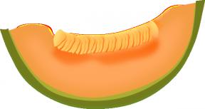 Honeydew clipart slice Zone Honeydew Cliparts Cliparts Cantaloupe