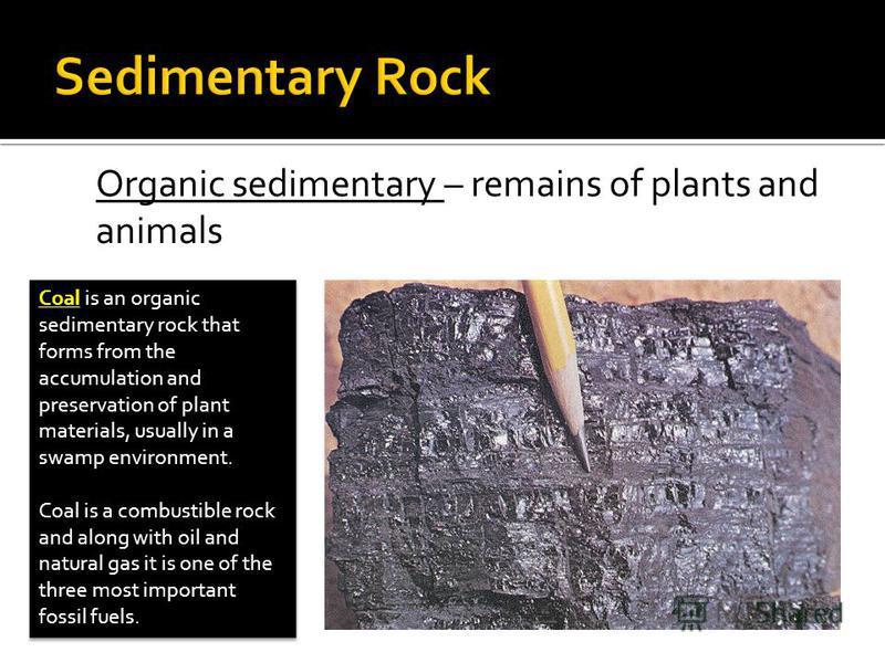 Caol clipart sedimentary rock Rocks fossils Igneous of sedimentary