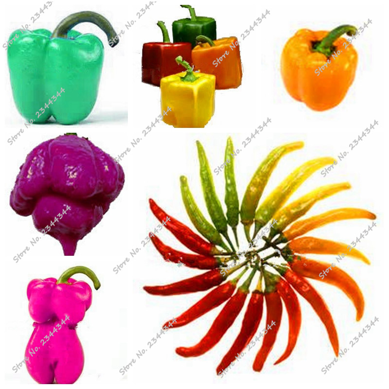 Capsicum clipart colour Capsicum seeds Capsicum chili annuum