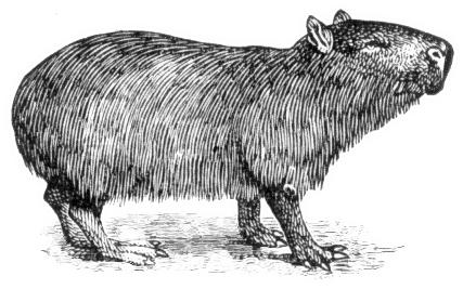 Capybara clipart Download Capybara BW Clip Capybara