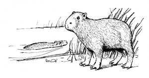 Capybara clipart Art Stream By Capybara Capybara