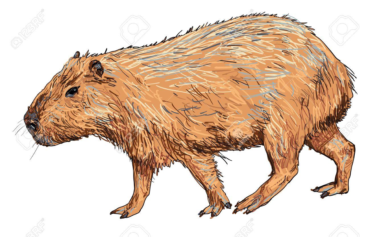 Capybara clipart Clipart #4 Fans clipart 69