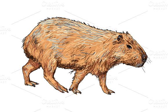 Capybara clipart Clipart #11 Fans clipart 69