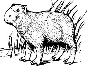 Capybara clipart Clip Capybara Art Capybara Download