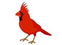 Cardinal clipart Graphics Kb Results Cardinal Bird